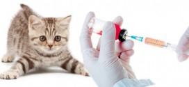 У Тернополі проведуть профілактичні щеплення собак, котів та хижих тварин проти сказу