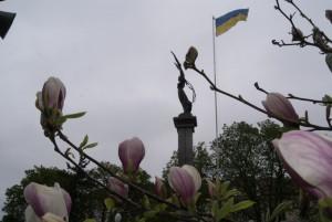 magnoliya (4)