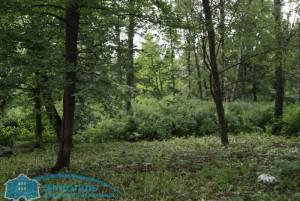 park_zdor-8 (1)