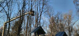"""Працівники ПП """"Східний масив"""" проводять санітарну обрізку дерев"""