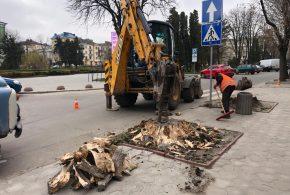 На вулиці Листопадовій висадять нові дерева